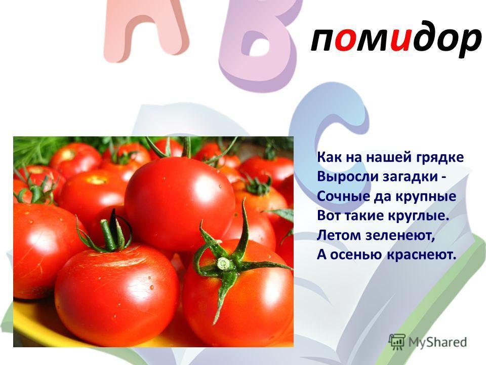 помидор Как на нашей грядке Выросли загадки - Сочные да крупные Вот такие круглые. Летом зеленеют, А осенью краснеют.