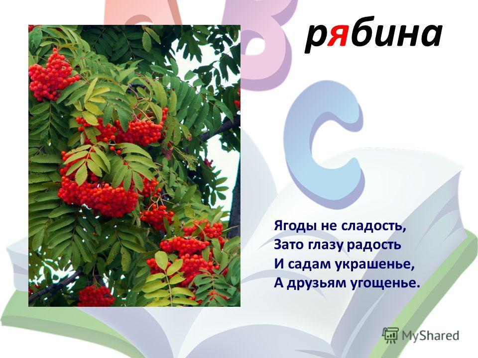 рябина Ягоды не сладость, Зато глазу радость И садам украшенье, А друзьям угощенье.