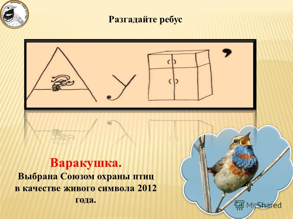 Разгадайте ребус Варакушка. Выбрана Союзом охраны птиц в качестве живого символа 2012 года.