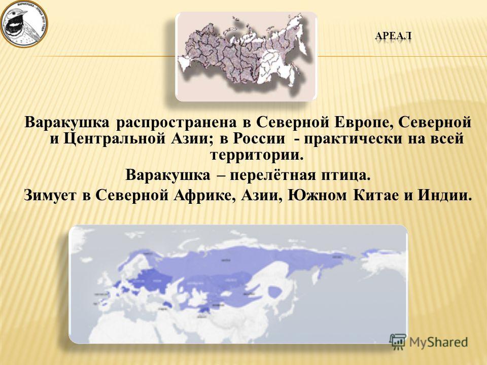 Варакушка распространена в Северной Европе, Северной и Центральной Азии; в России - практически на всей территории. Варакушка – перелётная птица. Зимует в Северной Африке, Азии, Южном Китае и Индии.