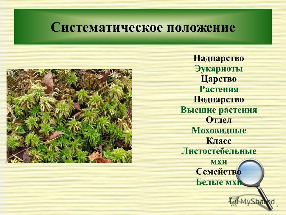 Систематическое положение 7 Надцарство Эукариоты Царство Растения Подцарство Высшие растения Отдел Моховидные Класс Листостебельные мхи Семейство Белые мхи