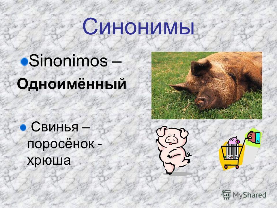 Синонимы Sinonimos – Одноимённый Свинья – поросёнок - хрюша