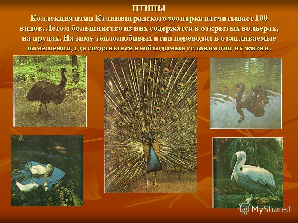 «Узнай животного»