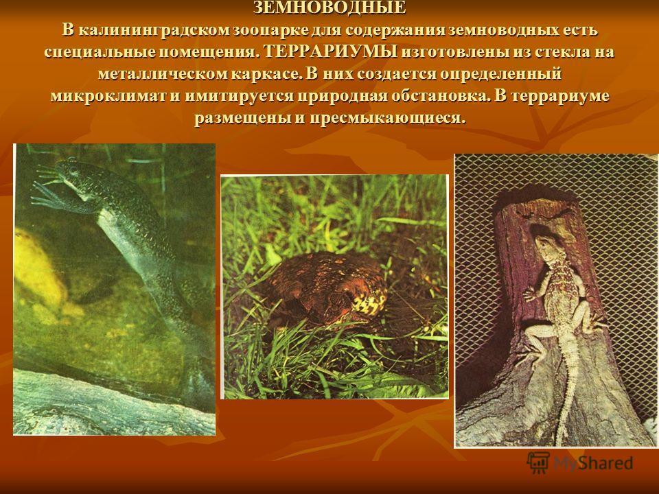 ПТИЦЫ Коллекция птиц Калининградского зоопарка насчитывает 100 видов. Летом большинство из них содержатся в открытых вольерах, на прудах. На зиму теплолюбивых птиц переводят в отапливаемые помещения, где созданы все необходимые условия для их жизни.