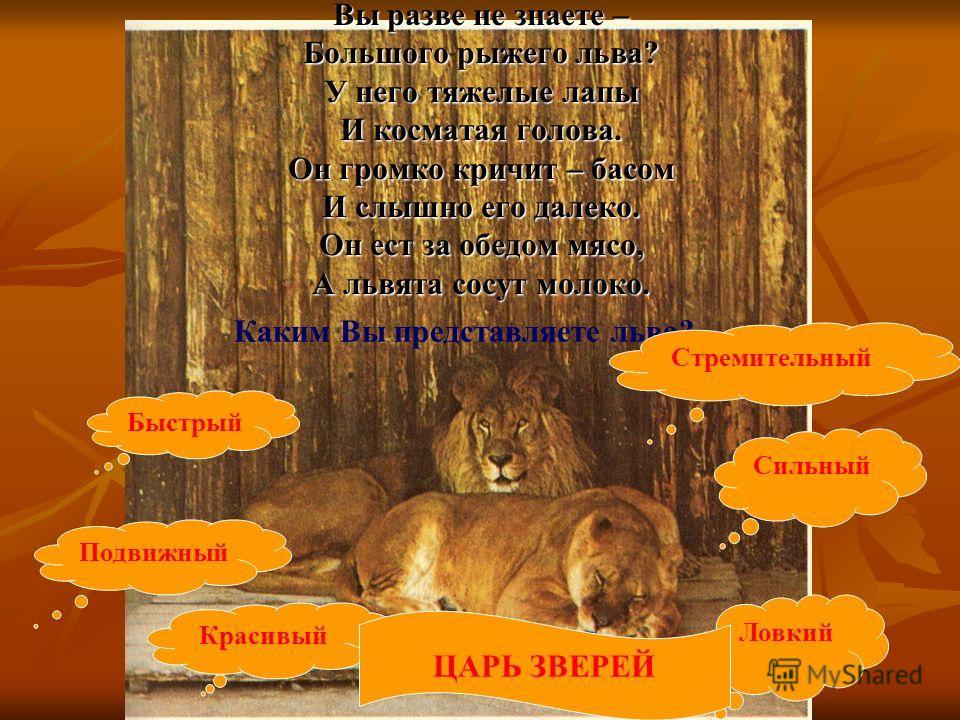Хищник полосатый, Рыжий и усатый. На кота похож немножко и мяукает как кошка. Тигра называют владыкой джунглей. Желтые и черные полосы на тигриной шкуре помогают тигру скрываться в тростниках и подкарауливать свою добычу. Тигры живут в Индии, Индонез