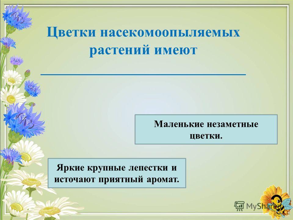Цветки насекомоопыляемых растений имеют ____________________________ Яркие крупные лепестки и источают приятный аромат. Маленькие незаметные цветки.