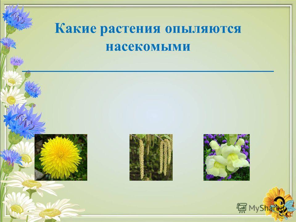 Какие растения опыляются насекомыми __________________________________
