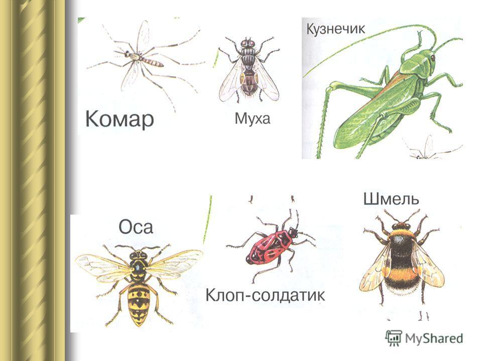 Почему эти животные не насекомые ?