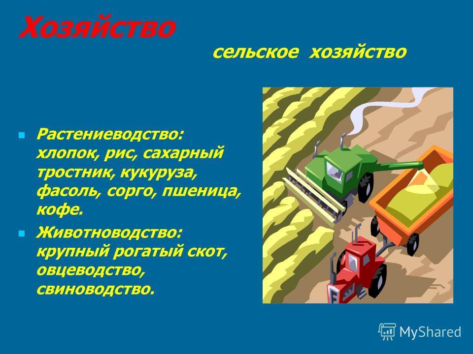 Хозяйство сельское хозяйство Растениеводство: хлопок, рис, сахарный тростник, кукуруза, фасоль, сорго, пшеница, кофе. Животноводство: крупный рогатый скот, овцеводство, свиноводство.