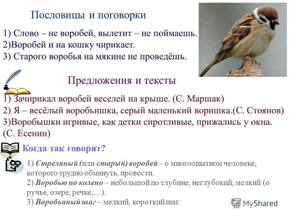 Пословицы и поговорки 1) Слово – не воробей, вылетит – не поймаешь. 2)Воробей и на кошку чирикает. 3) Старого воробья на мякине не проведёшь. Предложения и тексты 1) Зачирикал воробей веселей на крыше. (С. Маршак) 2) Я – весёлый воробьишка, серый мал