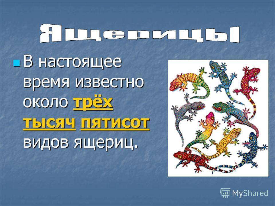 В настоящее время известно около трёх тысяч пятисот видов ящериц. В настоящее время известно около трёх тысяч пятисот видов ящериц.
