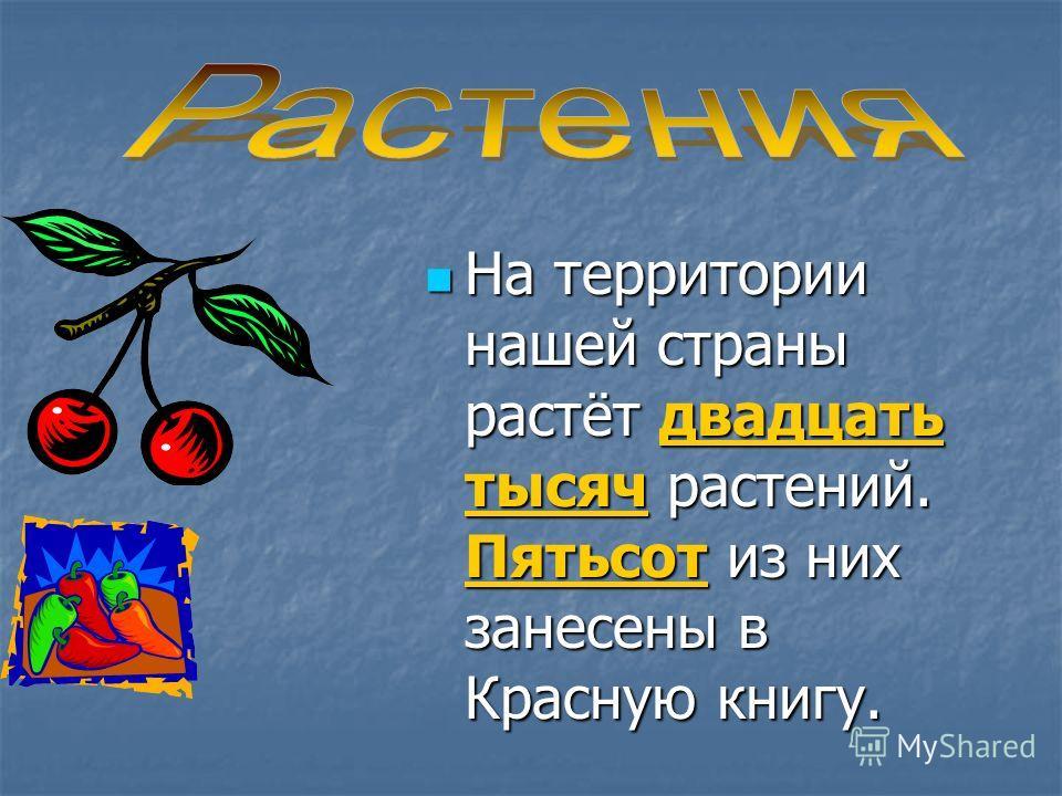 На территории нашей страны растёт двадцать тысяч растений. Пятьсот из них занесены в Красную книгу. На территории нашей страны растёт двадцать тысяч растений. Пятьсот из них занесены в Красную книгу.