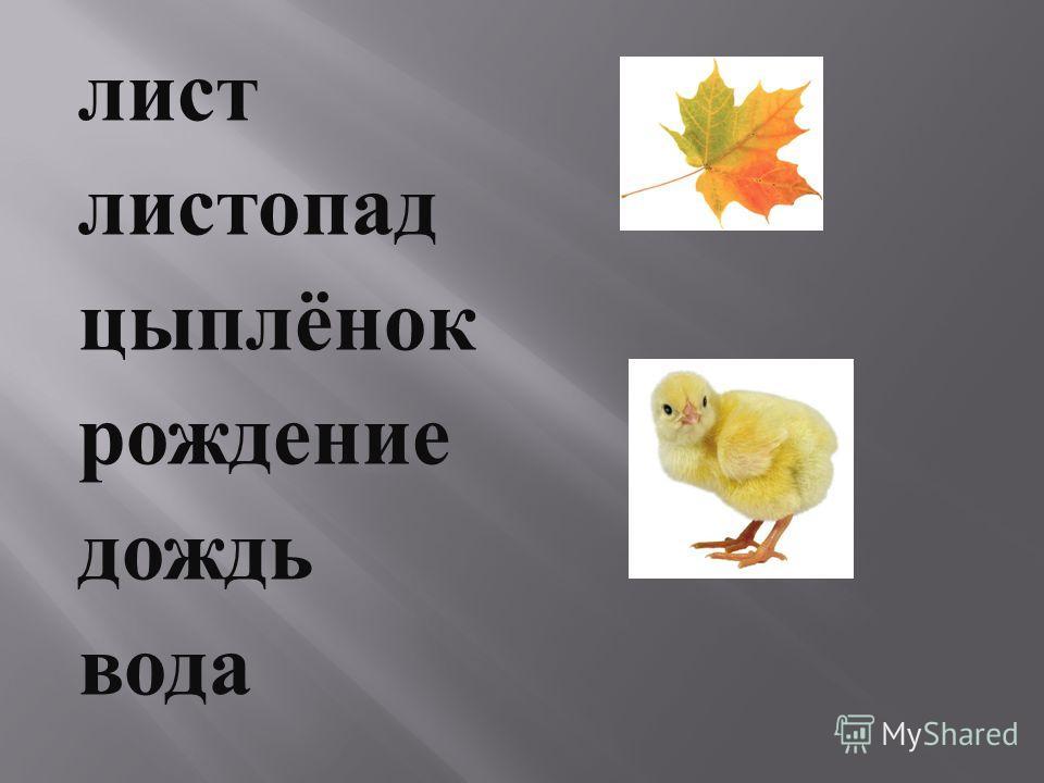 лист листопад цыплёнок рождение дождь вода