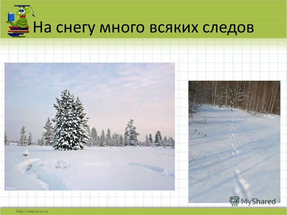 На снегу много всяких следов