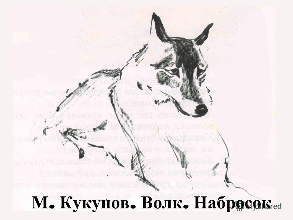 М. М. Кукунов. Волк. Набросок