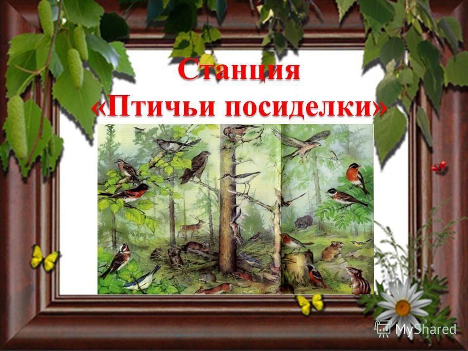 Станция «Птичьи посиделки»