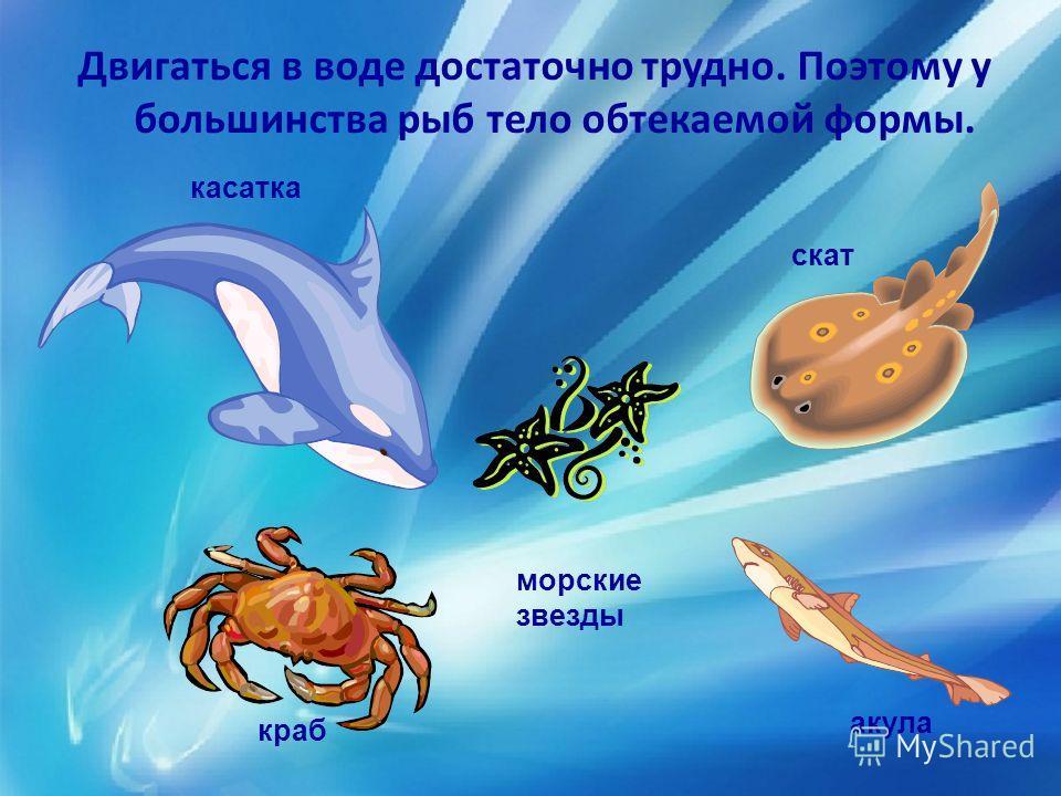 Двигаться в воде достаточно трудно. Поэтому у большинства рыб тело обтекаемой формы. касатка краб скат акула морские звезды