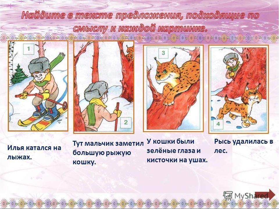 Илья катался на лыжах. Тут мальчик заметил большую рыжую кошку. У кошки были зелёные глаза и кисточки на ушах. Рысь удалилась в лес.