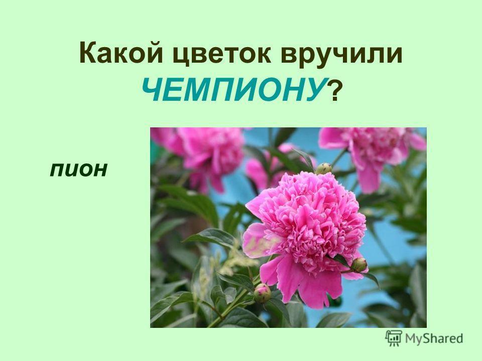 Какой цветок вручили ЧЕМПИОНУ ? пион