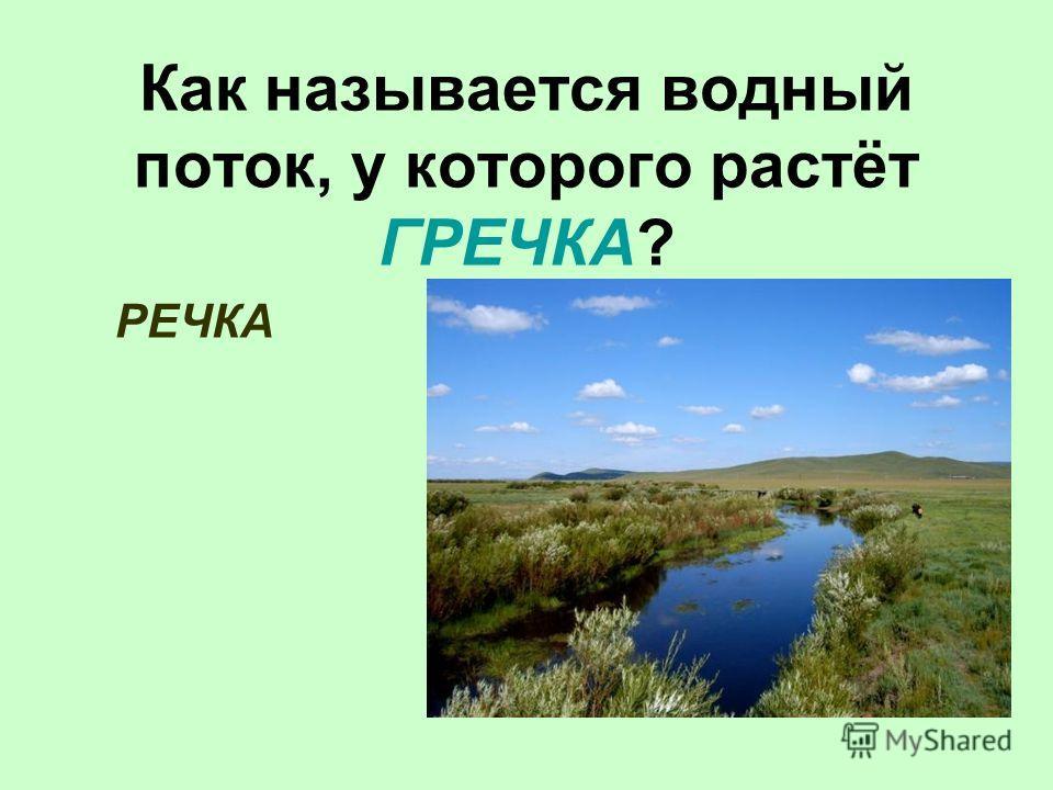 Как называется водный поток, у которого растёт ГРЕЧКА? РЕЧКА