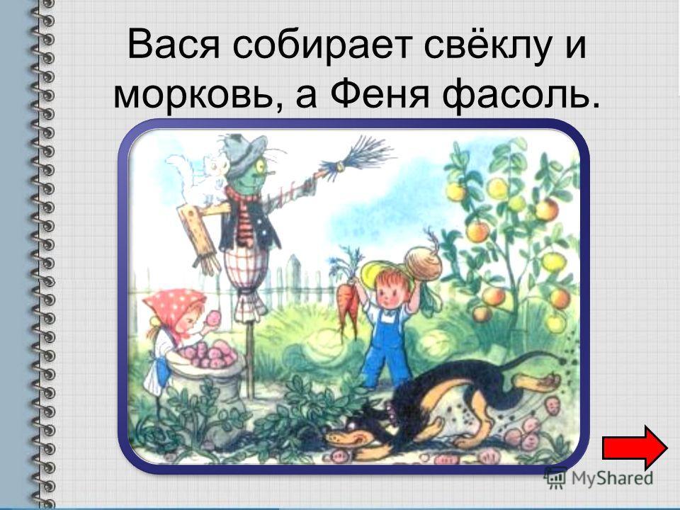 Вася собирает свёклу и морковь, а Феня фасоль.
