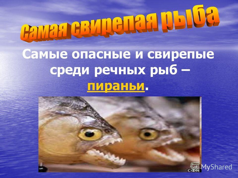 Самые опасные и свирепые среди речных рыб – пираньи.