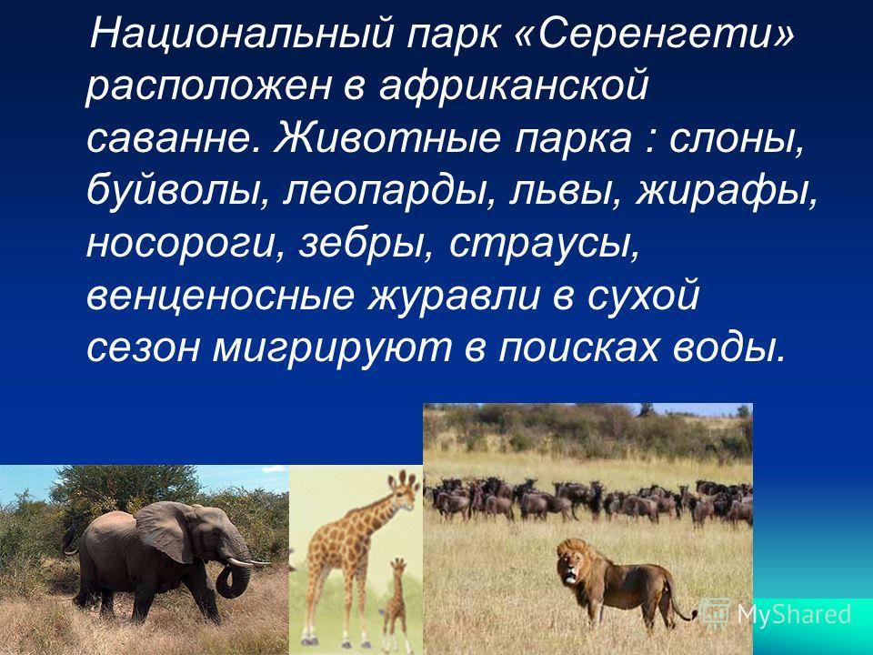 Национальный парк «Серенгети» расположен в африканской саванне. Животные парка : слоны, буйволы, леопарды, львы, жирафы, носороги, зебры, страусы, венценосные журавли в сухой сезон мигрируют в поисках воды.