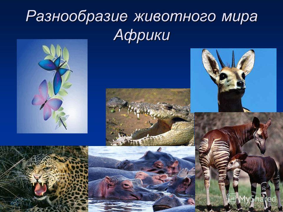 Разнообразие животного мира Африки