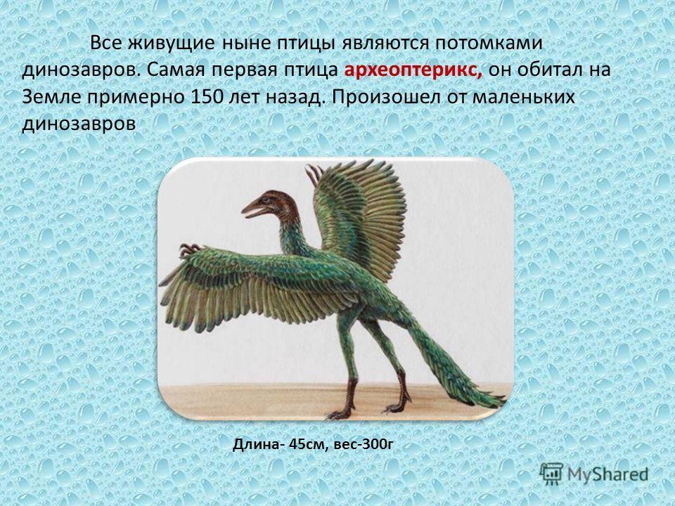 Все живущие ныне птицы являются потомками динозавров. Самая первая птица археоптерикс, он обитал на Земле примерно 150 лет назад. Произошел от маленьких динозавров Длина- 45 см, вес-300 г