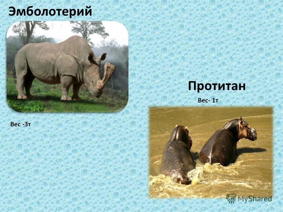 Эмболотерий Вес -3 т Вес- 1 т Протитан