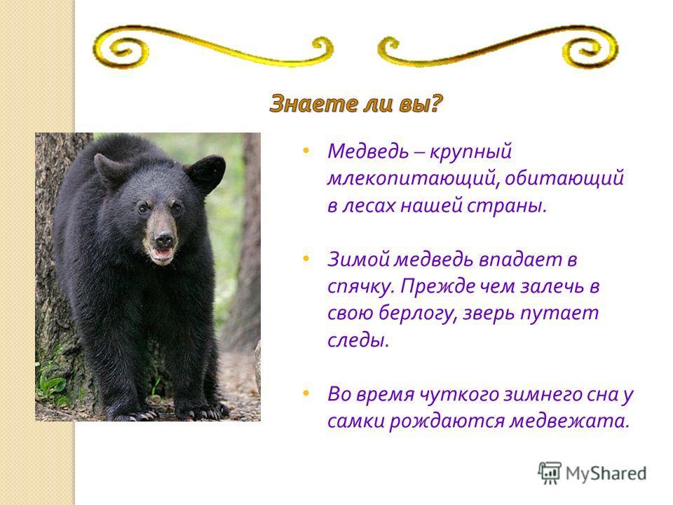 Медведь – крупный млекопитающий, обитающий в лесах нашей страны. Зимой медведь впадает в спячку. Прежде чем залечь в свою берлогу, зверь путает следы. Во время чуткого зимнего сна у самки рождаются медвежата.