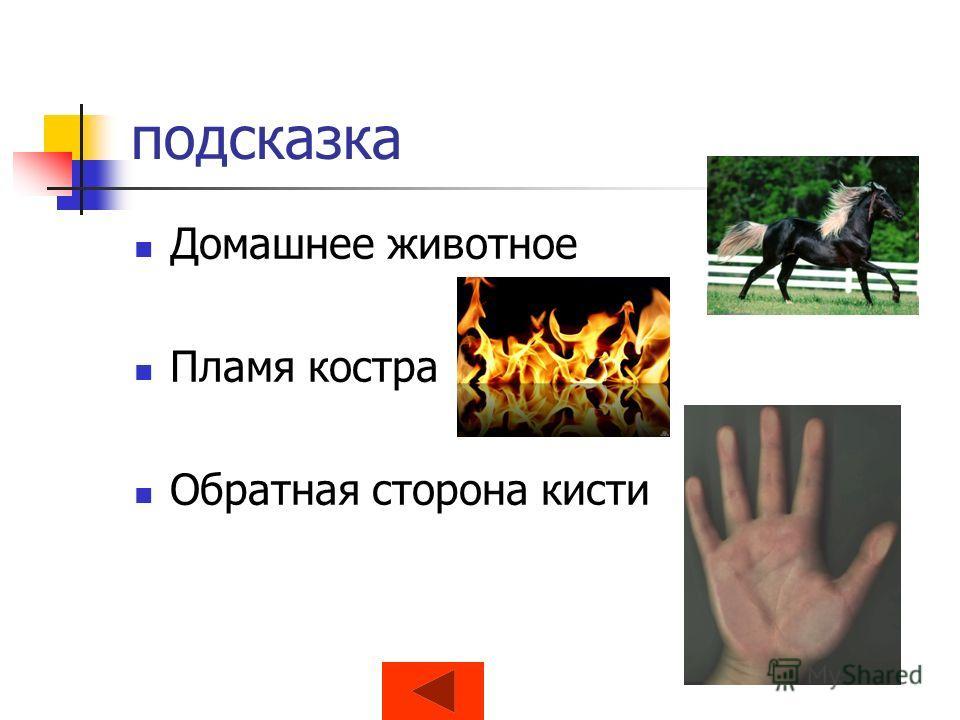 подсказка Домашнее животное Пламя костра Обратная сторона кисти