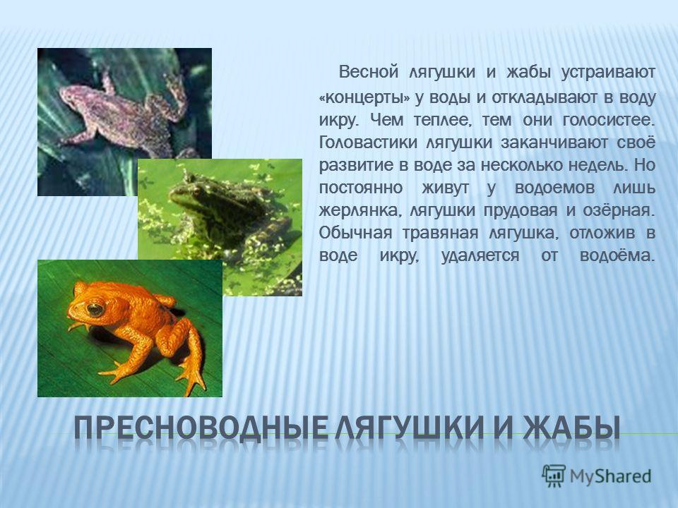 Весной лягушки и жабы устраивают «концерты» у воды и откладывают в воду икру. Чем теплее, тем они голосистее. Головастики лягушки заканчивают своё развитие в воде за несколько недель. Но постоянно живут у водоемов лишь жерлянка, лягушки прудовая и оз