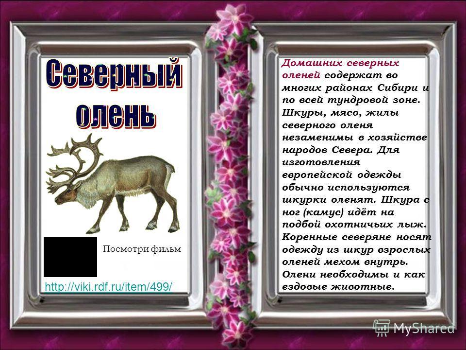 Домашних северных оленей содержат во многих районах Сибири и по всей тундровой зоне. Шкуры, мясо, жилы северного оленя незаменимы в хозяйстве народов Севера. Для изготовления европейской одежды обычно используются шкурки оленят. Шкура с ног (камус) и