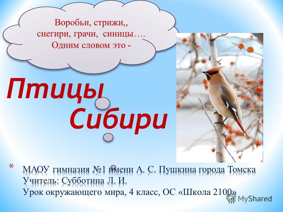 Воробьи, стрижи,, снегири, грачи, синицы…. Одним словом это - Птицы Сибири