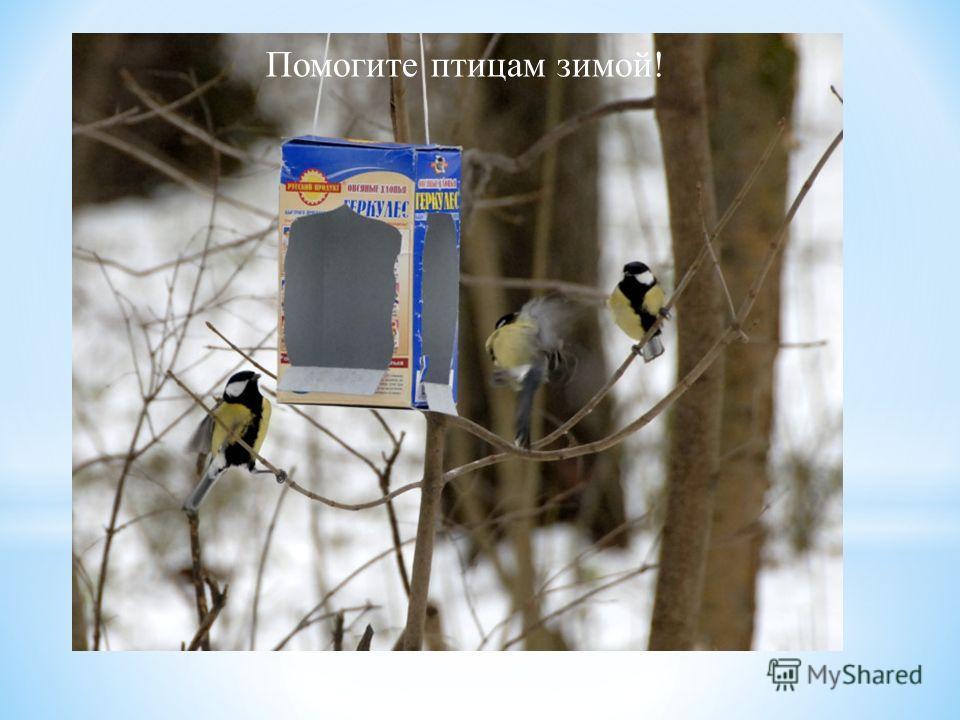 Помогите птицам зимой!