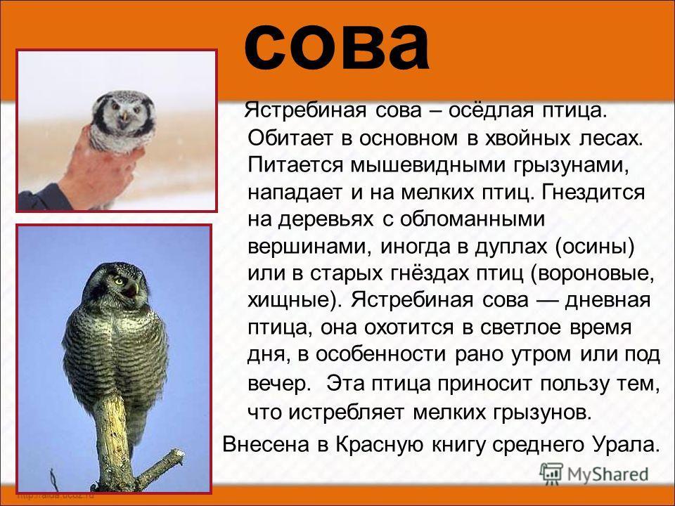 воробей Воробей домовый одна из наиболее широко известных птиц, живущих по соседству с человеком. Это осёдлая птица. Гнездится воробей отдельными парами. Гнёзда помещает в самых разнообразных местах: в норах, в дуплах, в скворечниках, обычно это груб