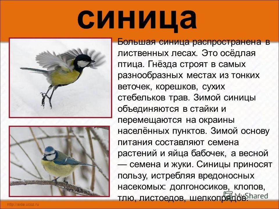 сорока Сорока осёдлая птица. Зиму проводит вблизи поселений человека, питаясь отбросами. Питается насекомыми, грызунами, птенцами, яйцами, зёрнами культурных злаков. Живёт эта птица парами. Гнездо строит в густых ветвях куста или дерева. Разоряя гнез