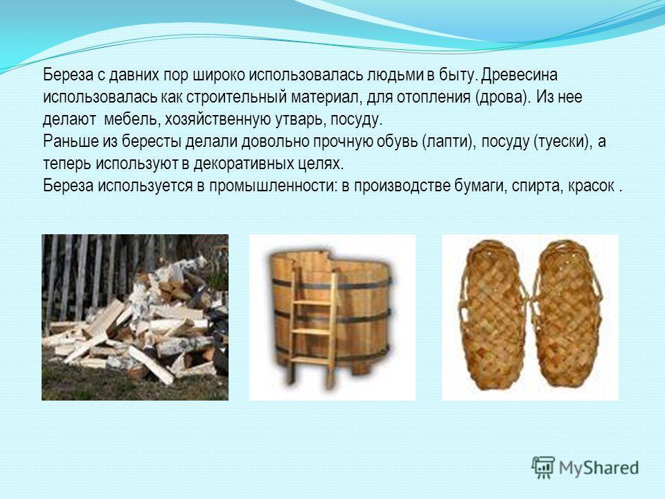 Береза с давних пор широко использовалась людьми в быту. Древесина использовалась как строительный материал, для отопления (дрова). Из нее делают мебель, хозяйственную утварь, посуду. Раньше из бересты делали довольно прочную обувь (лапти), посуду (т
