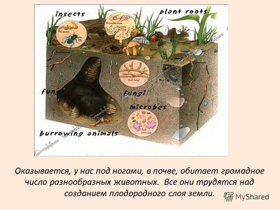 Оказывается, у нас под ногами, в почве, обитает громадное число разнообразных животных. Все они трудятся над созданием плодородного слоя земли.
