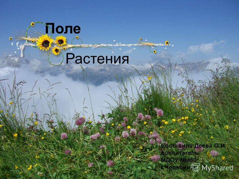 Поле Составила Деева О.И. воспитатель МДОУ 460 г.Челябинск Растения