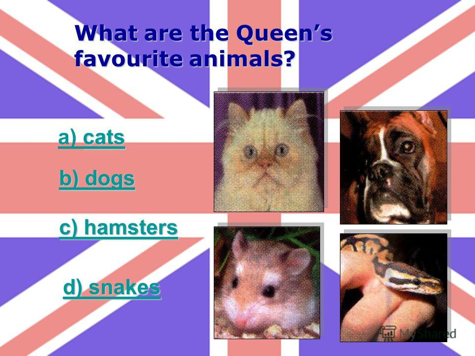 What are the Queens favourite animals? cats a) cats b) dogs b) dogs c) hamsters c) hamsters d) snakes d) snakes