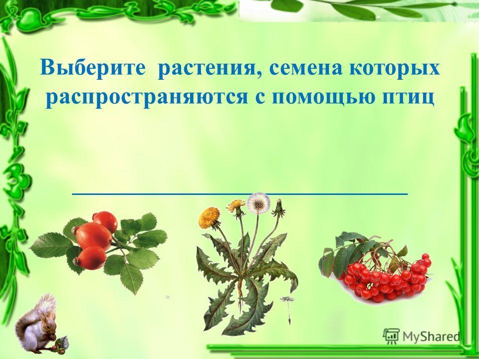 Выберите растения, семена которых распространяются с помощью птиц ____________________________