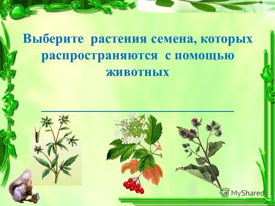 Выберите растения семена, которых распространяются с помощью животных ____________________________