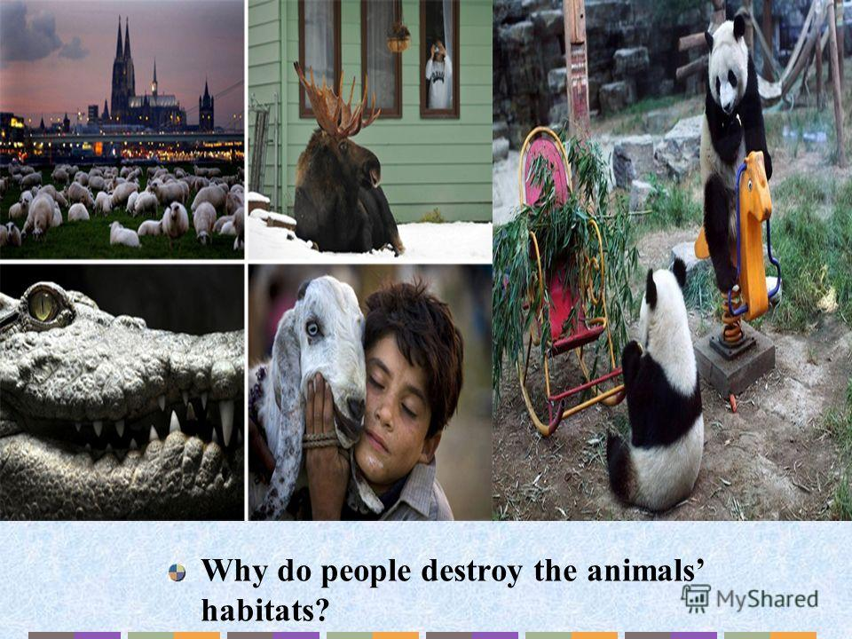 Why do people destroy the animals habitats?