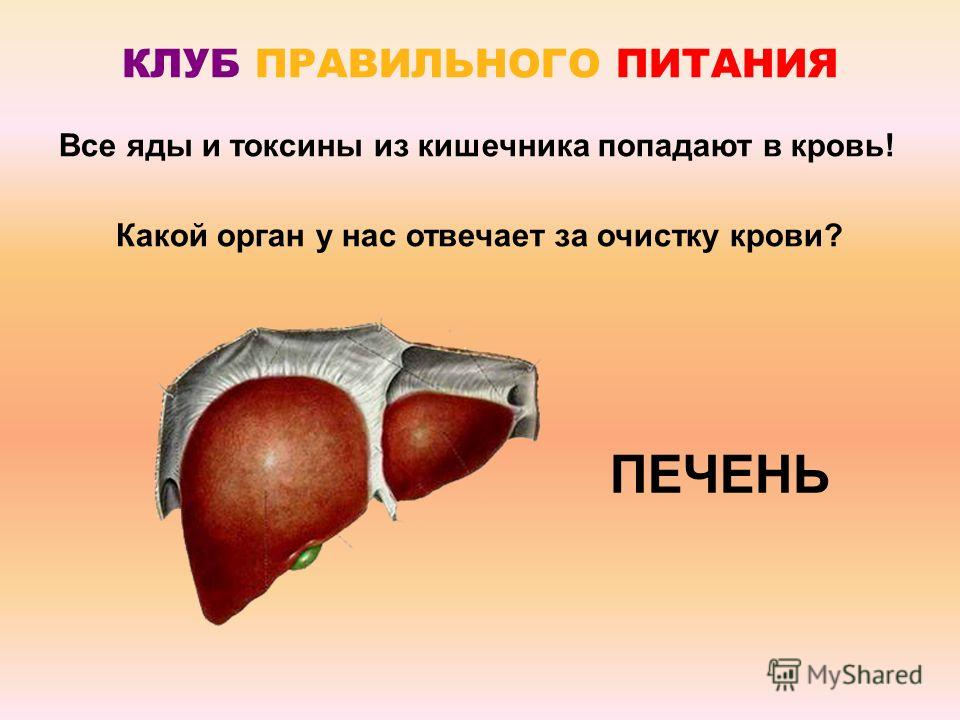 Все яды и токсины из кишечника попадают в кровь! КЛУБ ПРАВИЛЬНОГО ПИТАНИЯ Какой орган у нас отвечает за очистку крови? ПЕЧЕНЬ
