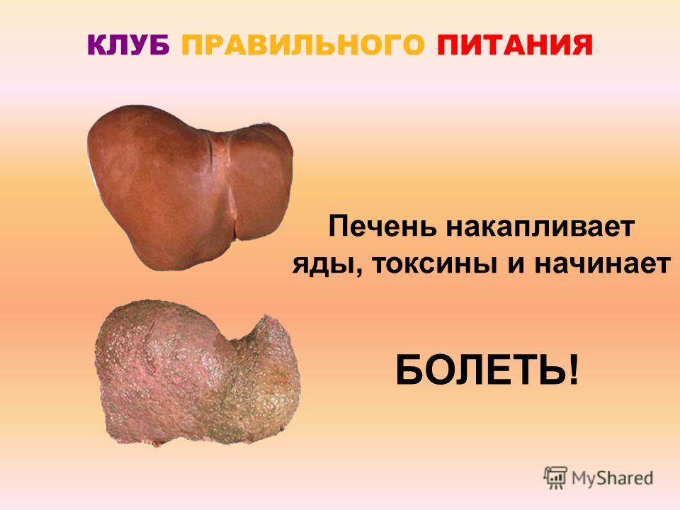 КЛУБ ПРАВИЛЬНОГО ПИТАНИЯ Печень накапливает яды, токсины и начинает БОЛЕТЬ!