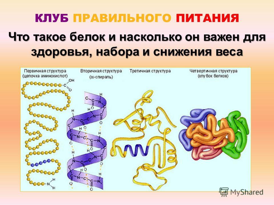 Что такое белок и насколько он важен для здоровья, набора и снижения веса КЛУБ ПРАВИЛЬНОГО ПИТАНИЯ