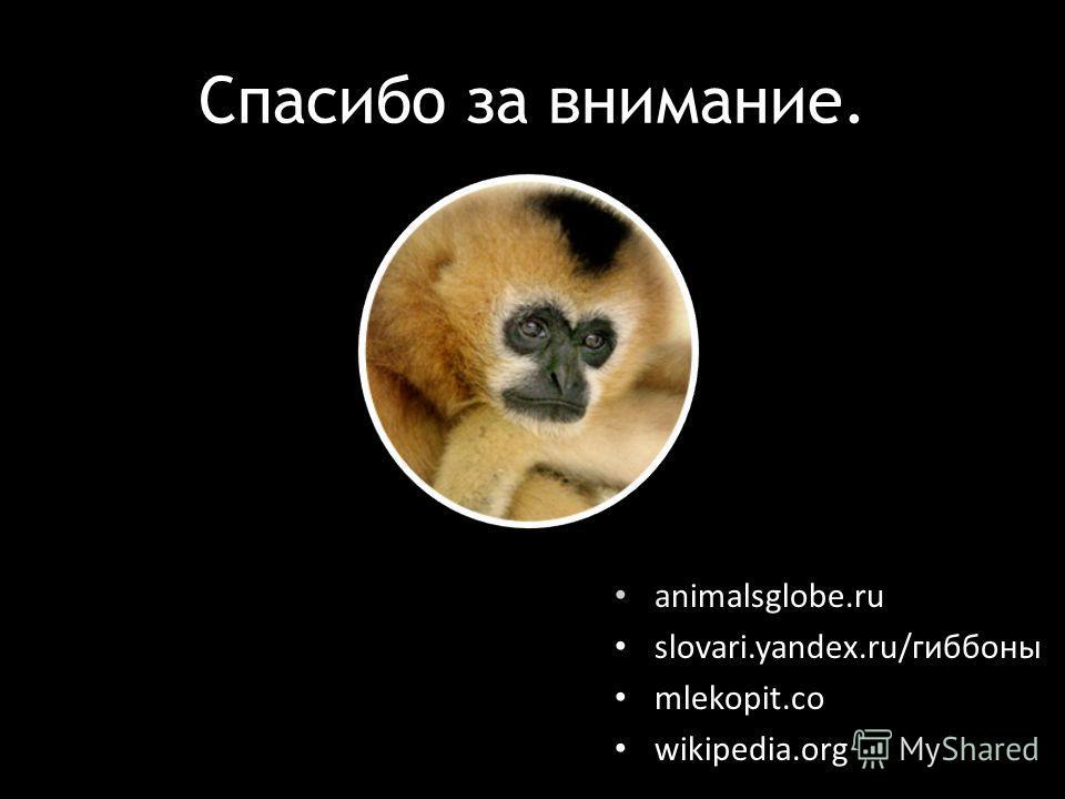 Спасибо за внимание. animalsglobe.ru slovari.yandex.ru/гиббоны mlekopit.co wikipedia.org