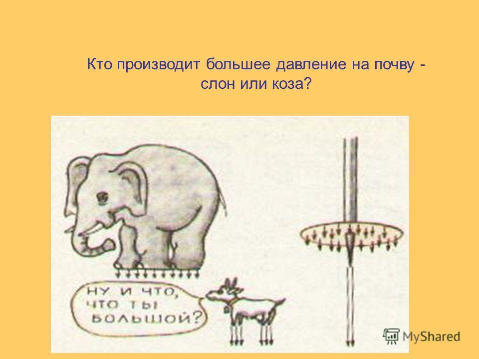 Кто производит большее давление на почву - слон или коза?